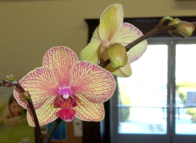 Orchid-ParisPL